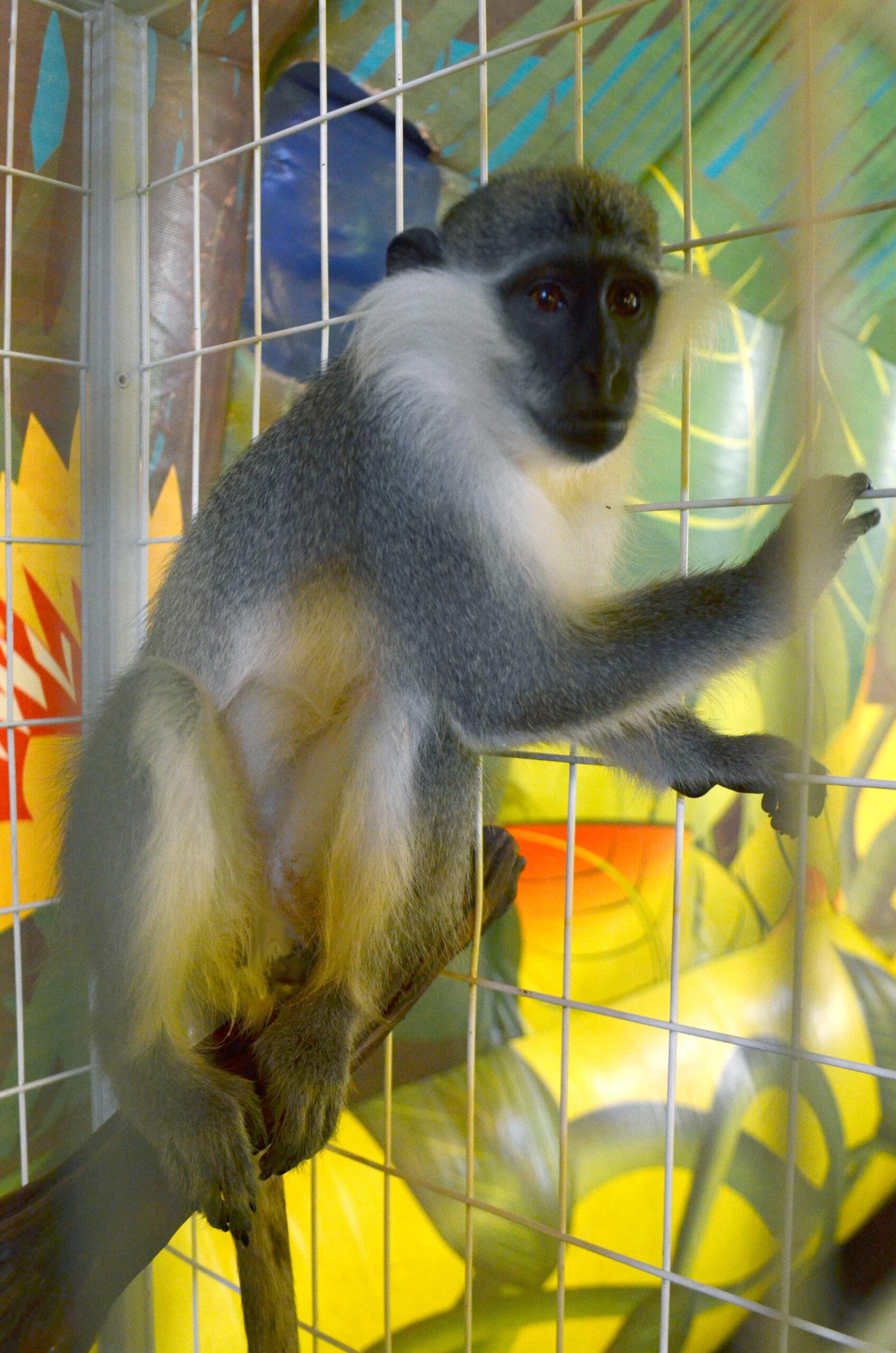 Кормление обезьянок и других пушистиков