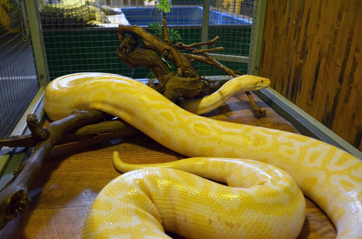 Кормление змей